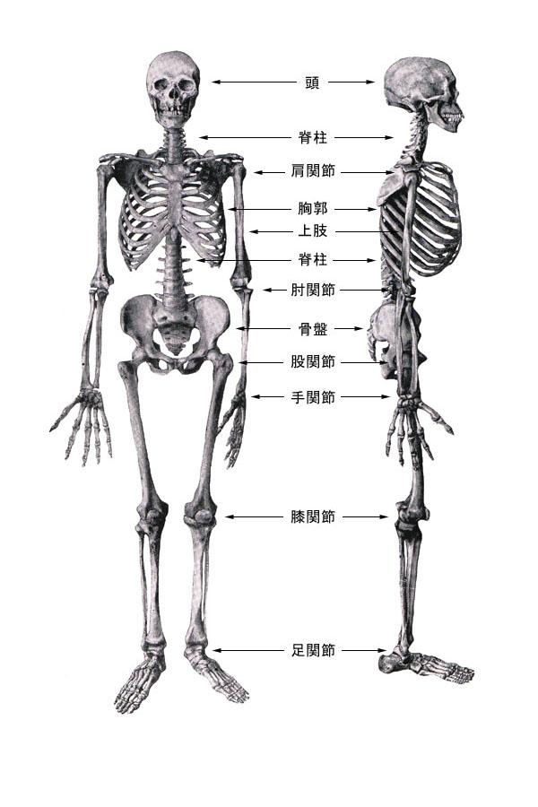 上腕骨内側上顆裂離骨折(肘が痛くて、投球できない!) | 古東整形外科・内科