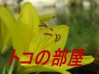 http://www5e.biglobe.ne.jp/~toko61/070616.jpg